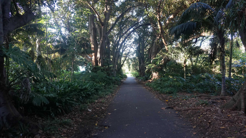 Walking through the beautiful & dense botanic gardens
